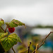 Scotland's Gardens Craigintinney Telferton July 2018 -94