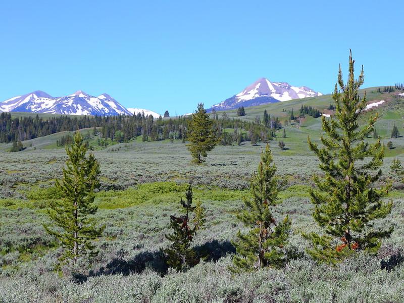 IMG_6488 Gallatin Range, Yellowstone National Park