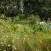 Scotland's Gardens Craigintinney Telferton July 2018 -108