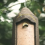 2018:07:22 13:34:54 - Bokeh - Hornissen im Vogelnistkasten - Kühlung per Flügelschlag