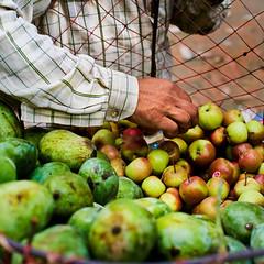 Man inspecting apples  in a vendors basket in Kathmandu, Nepal