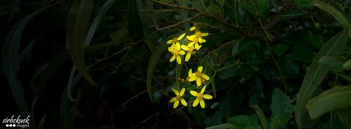 Lake Quidalup flora