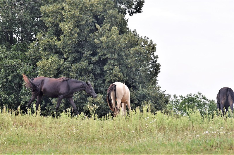 Horse 09.08 (5)