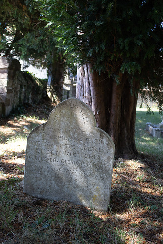 Queen Victoria's Yew, Sturminster Marshall