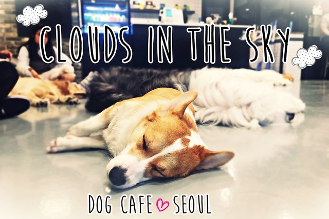 Clouds in the Sky - Dog Cafe - Hongdae - Seoul - South Korea