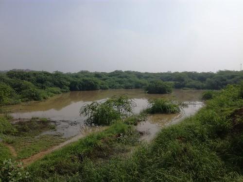 भारत वंदना उधरन तालाब सेक्टर 20 द्वारका दिल्ली