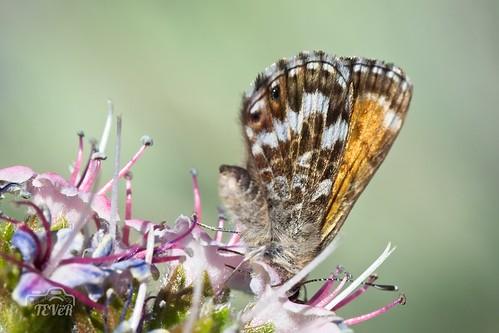 Mariposa (3)