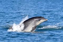 Dolphin Survey 19th July 2018