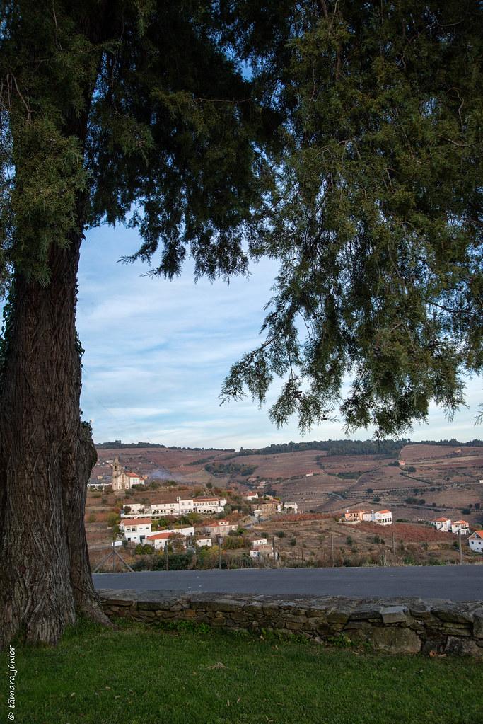 2017.- Pelo Douro no outono I (M313+N222) (285)