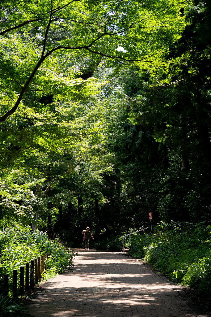 Loxia 2.4/85 Inokashira Park 5