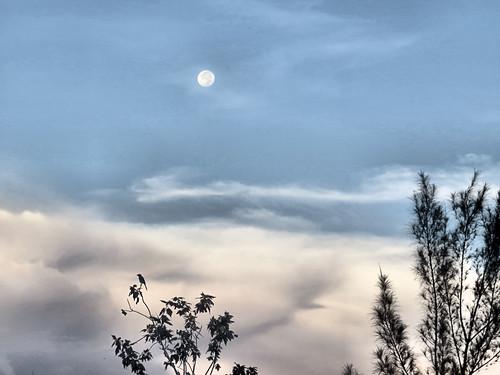 Buck Moon setting 5-20180729