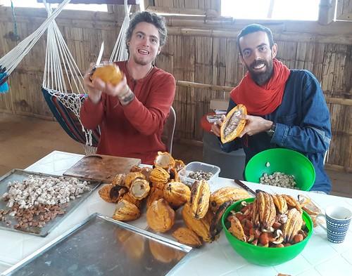 permatree ecuador volunteer tropical southamerica exoticfruits