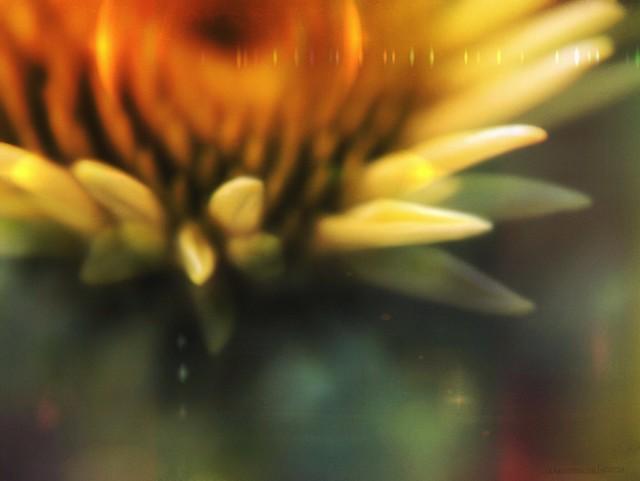"""scenes from another garden ~ 7"""