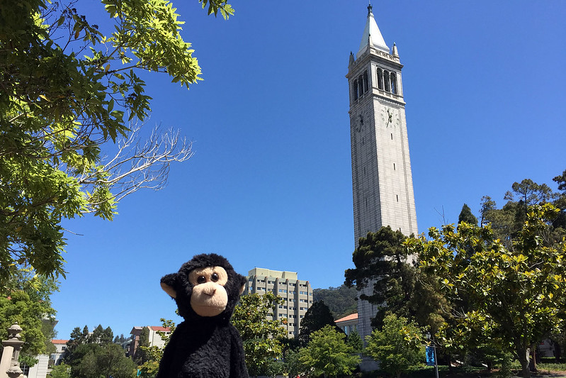 Monkey at UC Berkeley