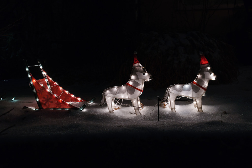 A Christmas lights display of two dogs and a dogsled on a snowy Christmas Eve in the Irvington neighborhood of Portland, Oregon