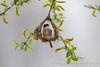 Beutelmeise    beim Nestbau