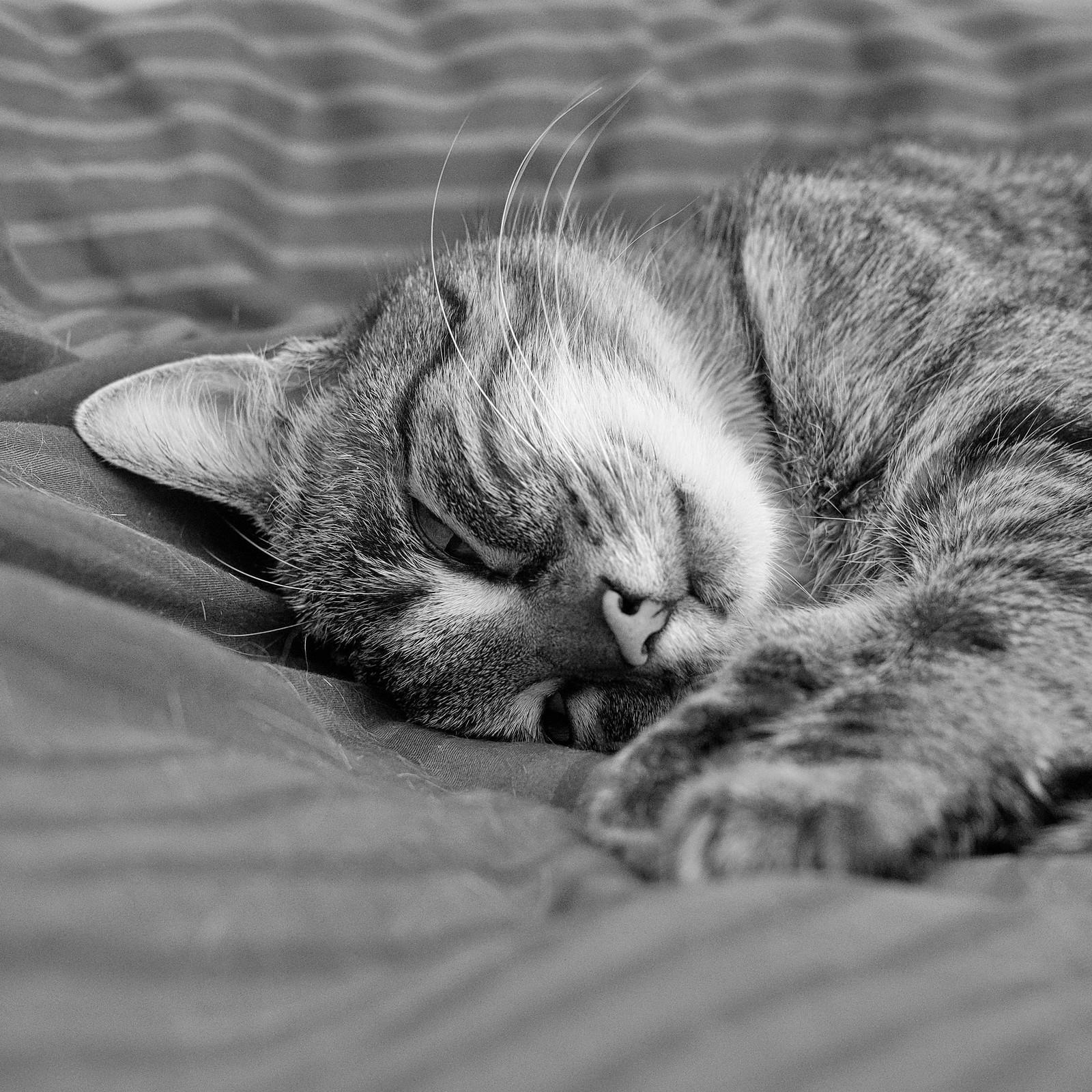 7e2_8051104-sfx-019-sleepy-cat