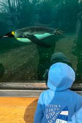 Boy meets penguin