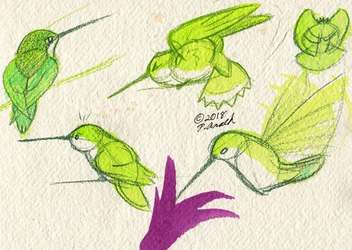 7.26.18 - Rainy Hummingbird