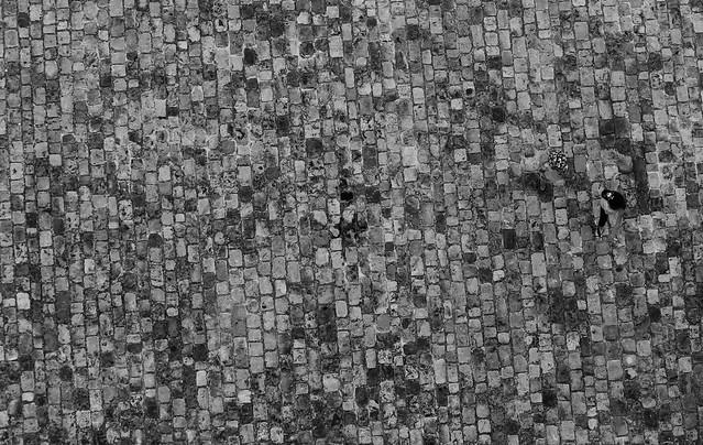 Mimétisme & camouflage..., Canon EOS 1100D, Canon EF 70-300mm f/4-5.6 IS USM