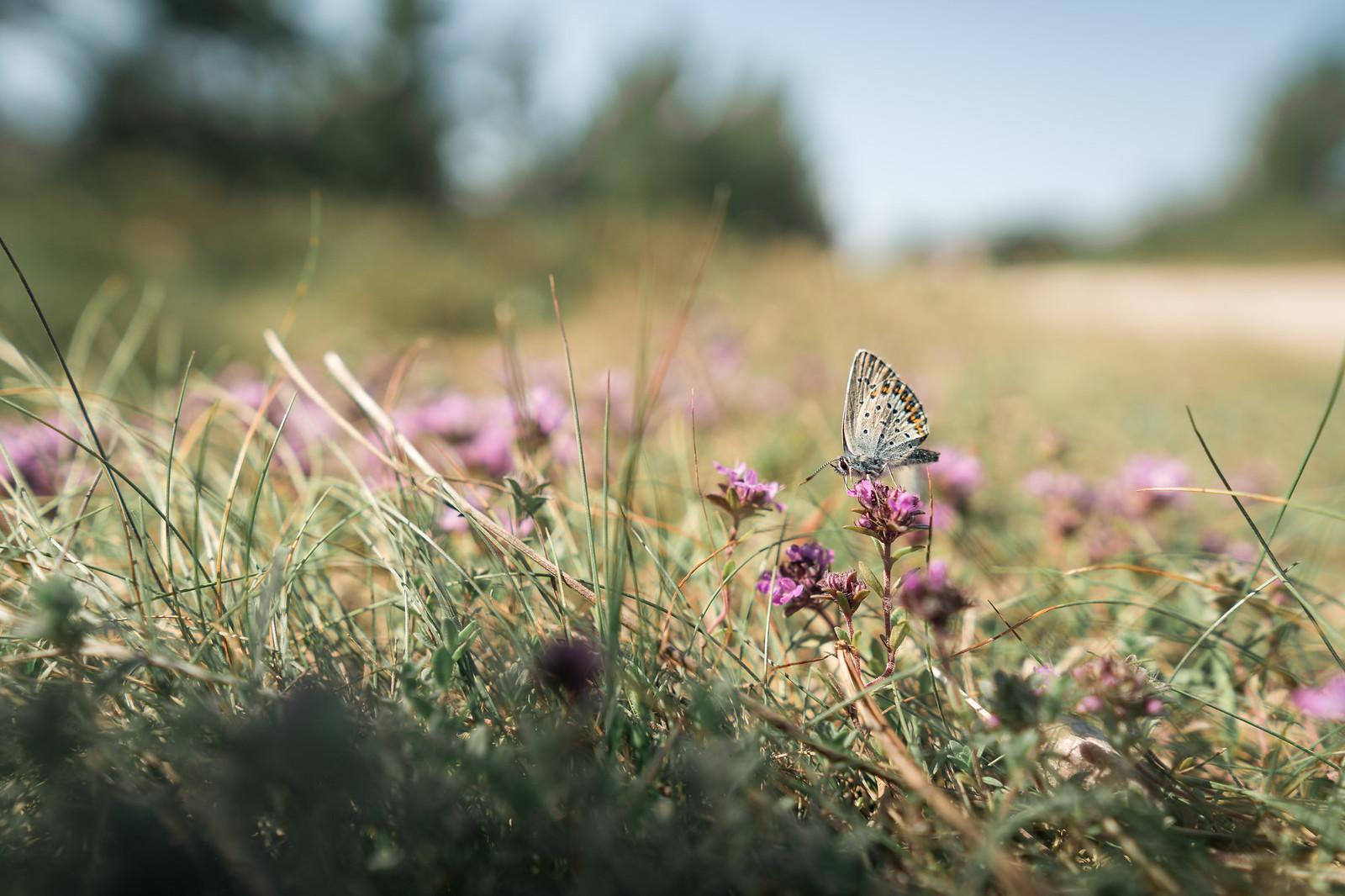 Perhosia ja muista pörriäisiä oli paljon ympärillä