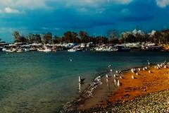 Bostancı-Suadiye sahilinde martılar