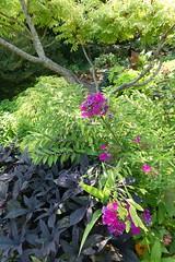 Queens Botanical Garden - July 2018 (68)