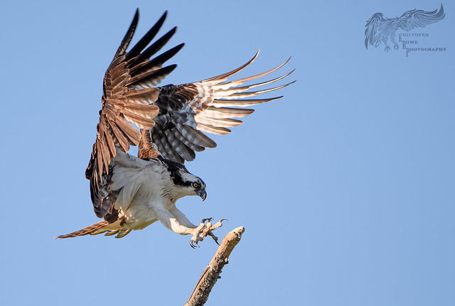 Osprey 7_20