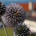 West Kilbride to Adrossan Beaches (5)