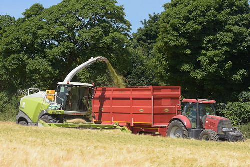 Claas Jaguar 870 SPFH filling a Thorpe Trailer drawn by a Case IH 160 Tractor