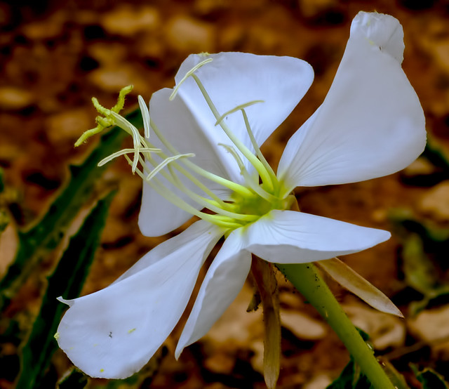 Wild-Flower-30-7D1-073118