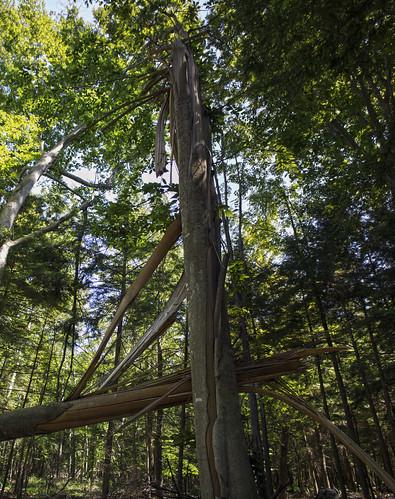 Navarino Cedar Swamp State Natural Area