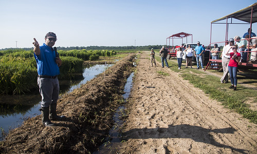 Rice Field Day 2018