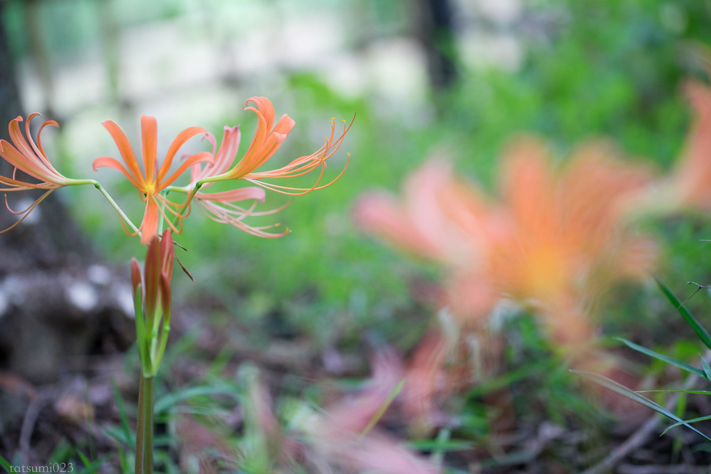 2017-07-25 小石川植物園 001-4