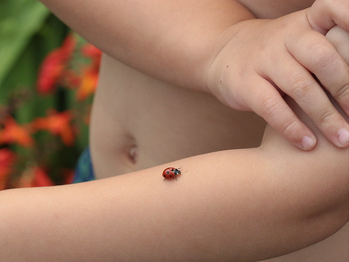 Keiki and the ladybird