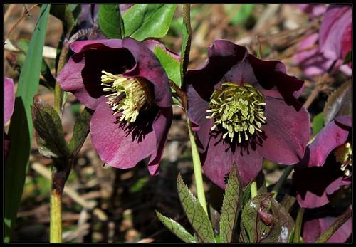 explosion florale - Page 3 27672495468_1ee18e1dff