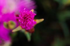 (F) Desierto Florido 2015