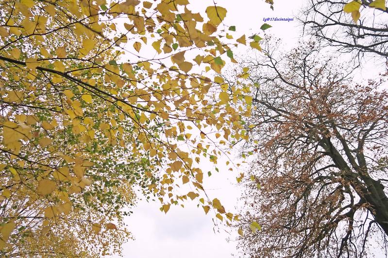 Kenwood-House-Hampstead-Heath-travel-london-BLOG-17docintaipei (5)