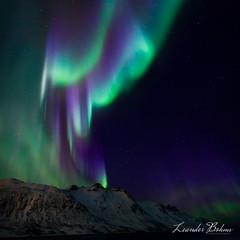 Aurora, Priestess of the Light
