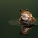 Whites Tree frog pond reflection by The-Hawk