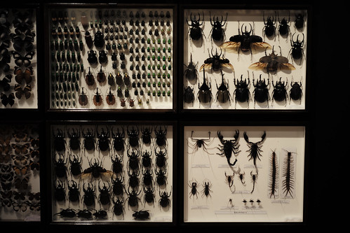 beetle's specimen