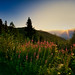 summer sunset (2) by pepinohd