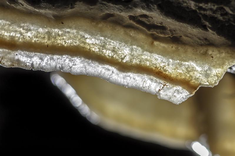 Curtain formation, Cedar Ridge Crystal Cave, Marion County, Tennessee [macro]