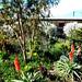 arid region winter garden
