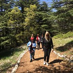 In the Cedars Forest