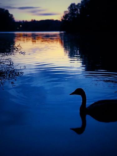 shakerlake shakerheights ohio cleveland sunset lake pond dusk duck roccotaco