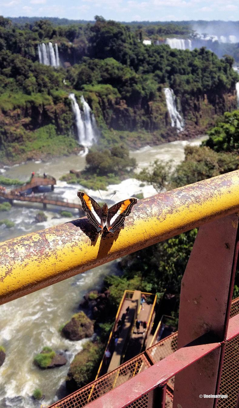 Putouksilla riittää myös kauniita perhosia.