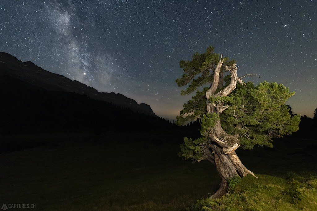 The tree under the stars - Engstlenalp