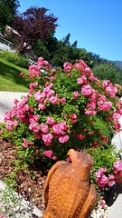 Blumen im GIZ Rosegg