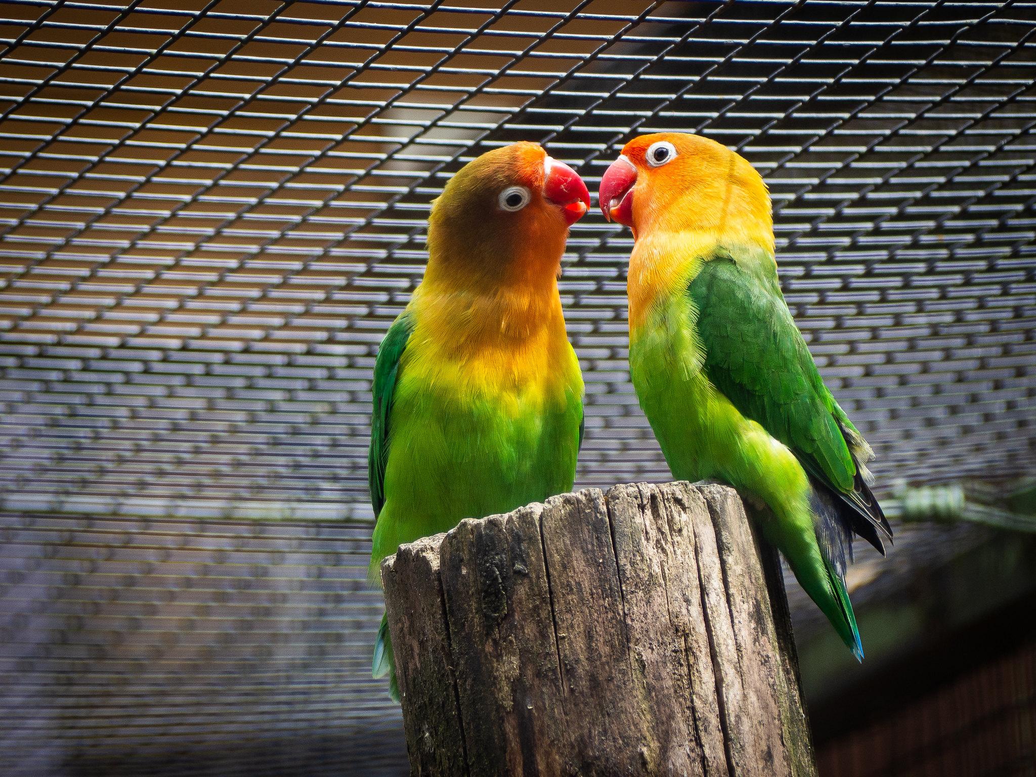 Zoo-6240108